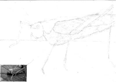 Darwin's Drawings
