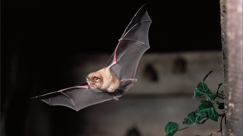 Wild about Bats!